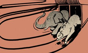 elephant and donkey out of gate theguardian com